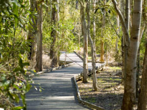 Image of a wooden walking track through bushland
