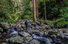 Three bushwalkers crossing a creek in a rainforest